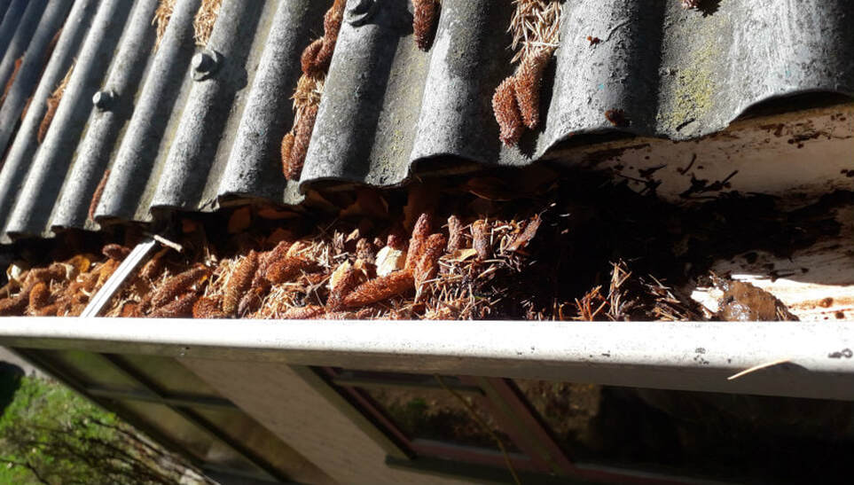 Signs your gutter needs cleaning